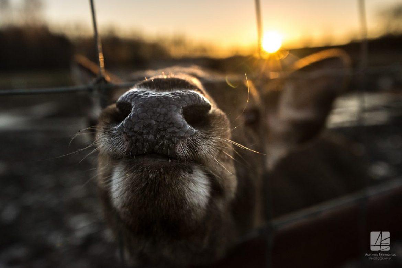Pasivaikščiojimas po Klaipėdos zoologijos sodą žiemą